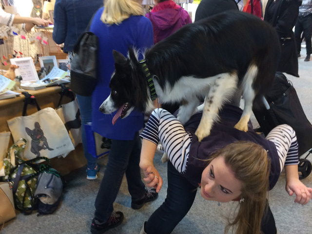Shepp the collie visiting the Mon Petit Chien stand at Crufts