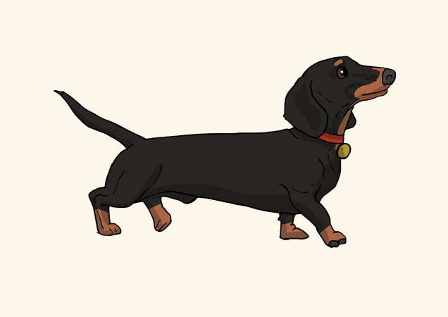 Dachshund blank greeting card by Mon Petit Chien