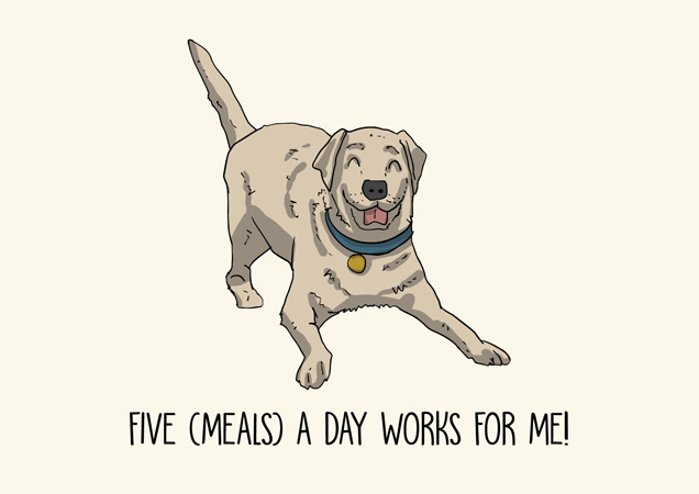 Five meals a day works for me! Funny labrador greeting card by Mon Petit Chien