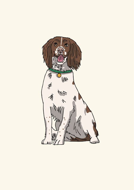 Springer spaniel blank greeting card by Mon Petit Chien