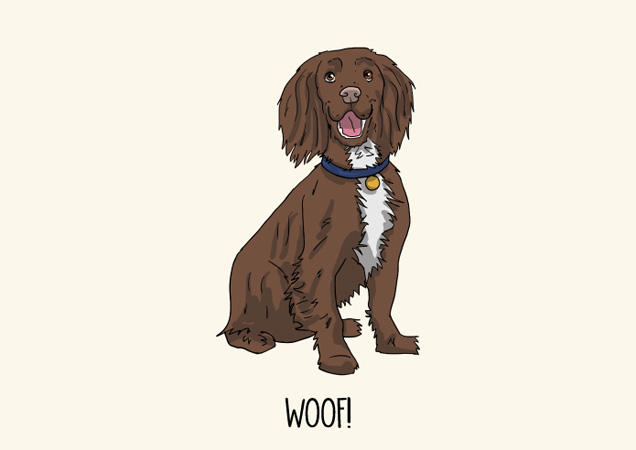 Woof! Chocolate Cocker spaniel postcard by Mon Petit Chien