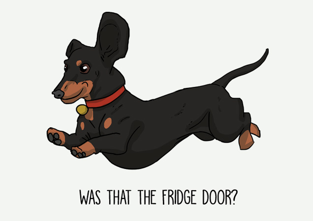 Was that the fridge door? Funny Dachshund postcard by Mon Petit Chien