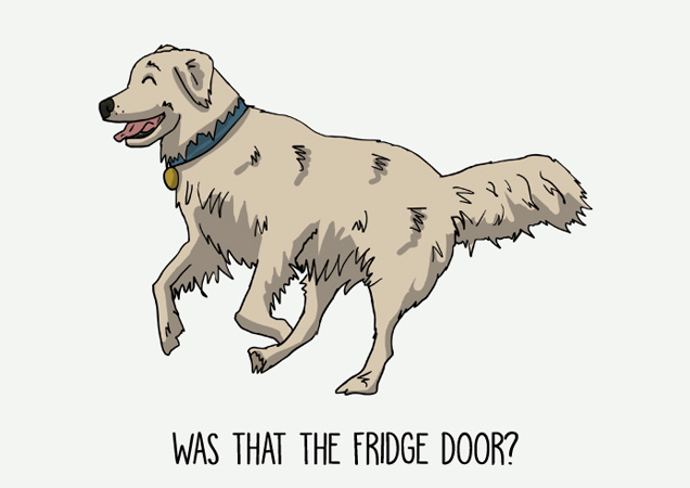 Was that the fridge door? Funny Golden Retriever postcard by Mon Petit Chien