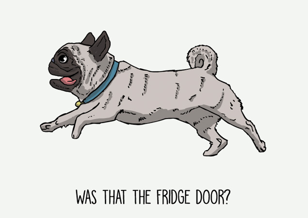 Was that the fridge door? Funny pug postcard by Mon Petit Chien