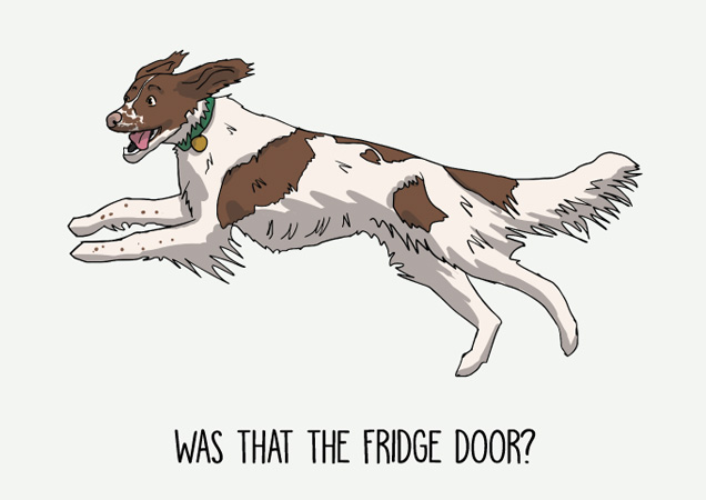 Was that the fridge door? Funny Springer Spaniel postcard by Mon Petit Chien