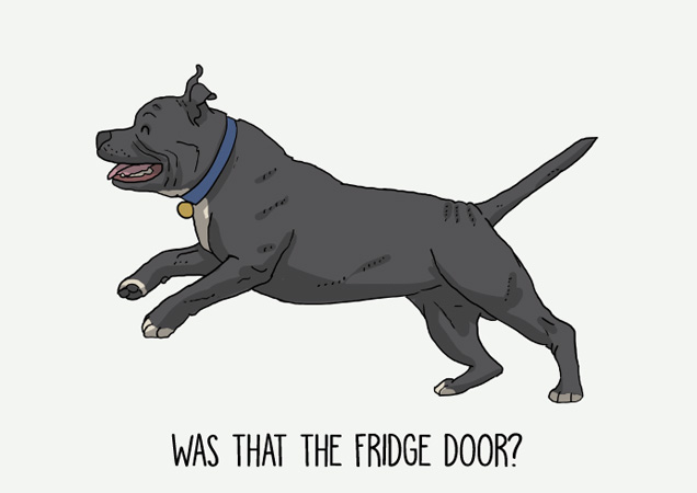 Was that the fridge door? Funny Staffie postcard by Mon Petit Chien